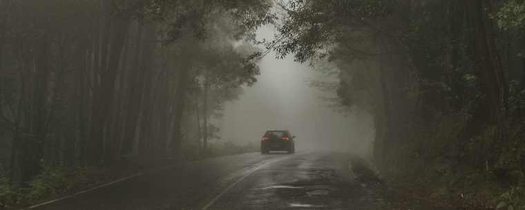 car on tree-lined road in fog